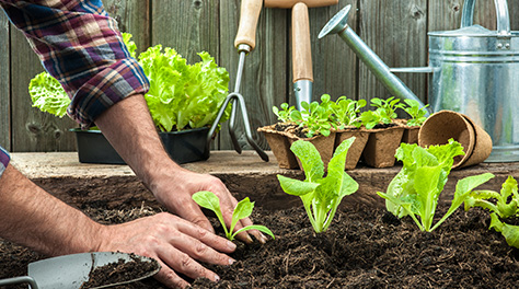 Man planting in soil in garden with trowel and other gardening tools