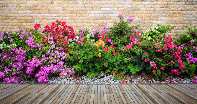 How to plant a flowerbed with expert Ellen Mary Gardening