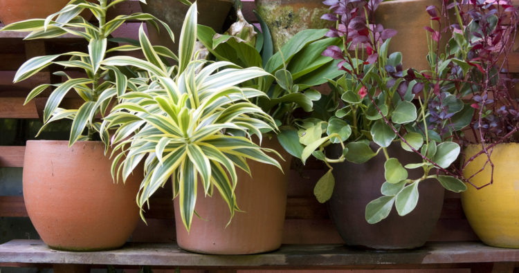 How to plant in containers with Ellen Mary Gardening